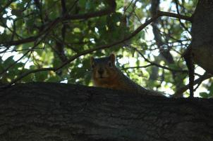 Cuteoff20080216_142222_SquirrelLakeMerrittOak_0175B.jpg