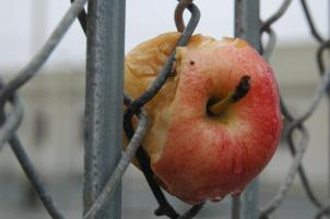 Apple_Fruit_20071229_163320_Bryant_St_SF_8976B.jpg